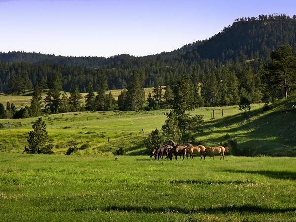 Perino Park Ranch