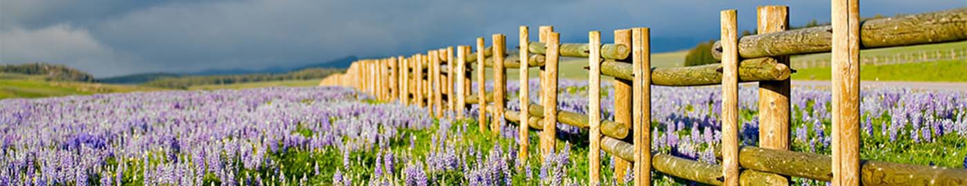 Fence Wildflowers